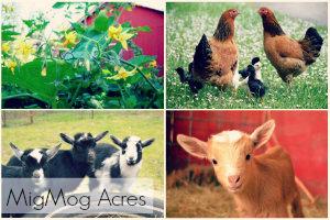 Visit MigMog Acres